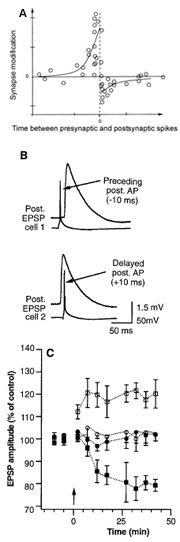 Spike-timing dependent plasticity (Bi & Poo 1998; Markram et al. 1997)