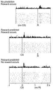 Dopamine signal related to reward and reward prediction (Schultz, 1999)